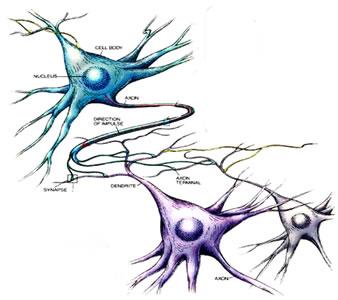 sinapsis-RedNeuronal-empowerment-liderazgo-leadership-empresa familiar-organizacion neuronal