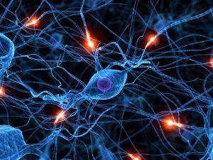 RedNeuronal-empowerment-liderazgo-leadership-empresa familiar-organizacion neuronal